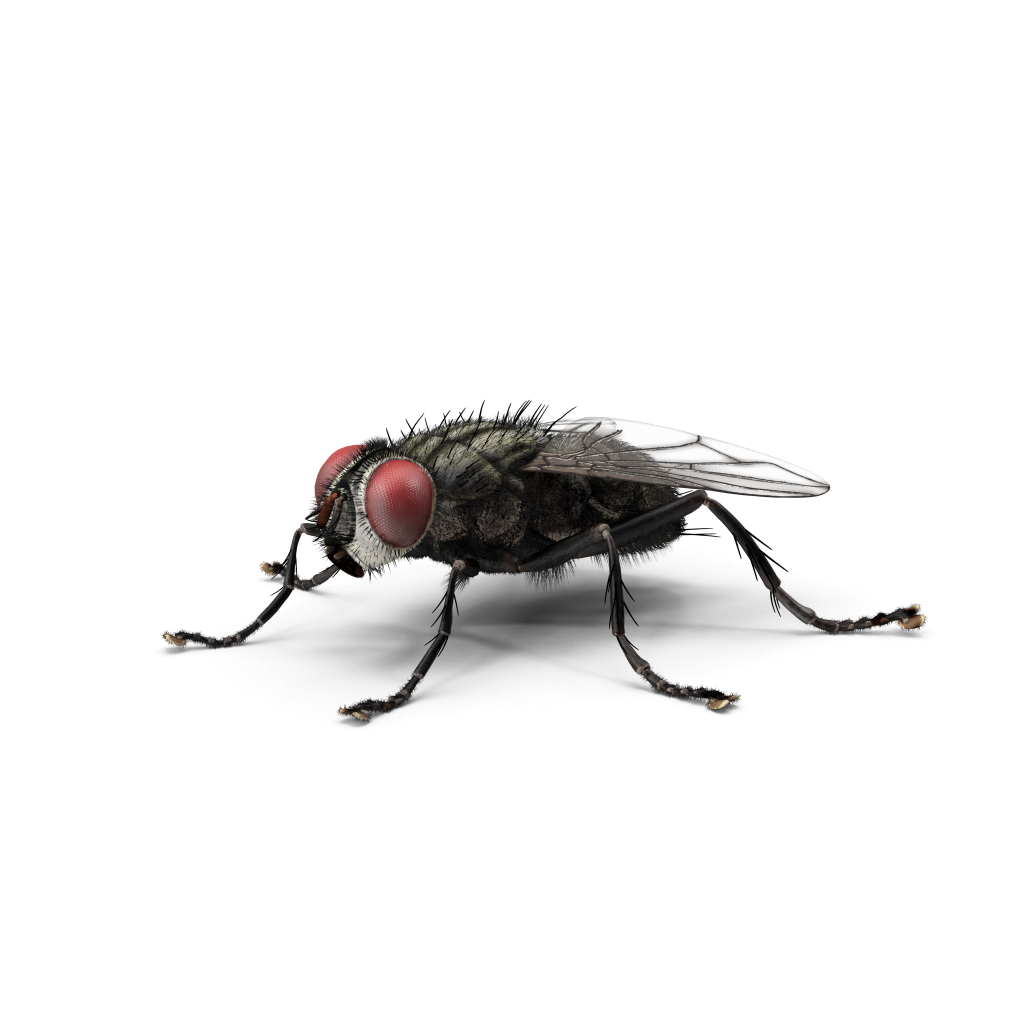 https://mantovaservice.it/wp-content/uploads/2017/11/housefly-01.png