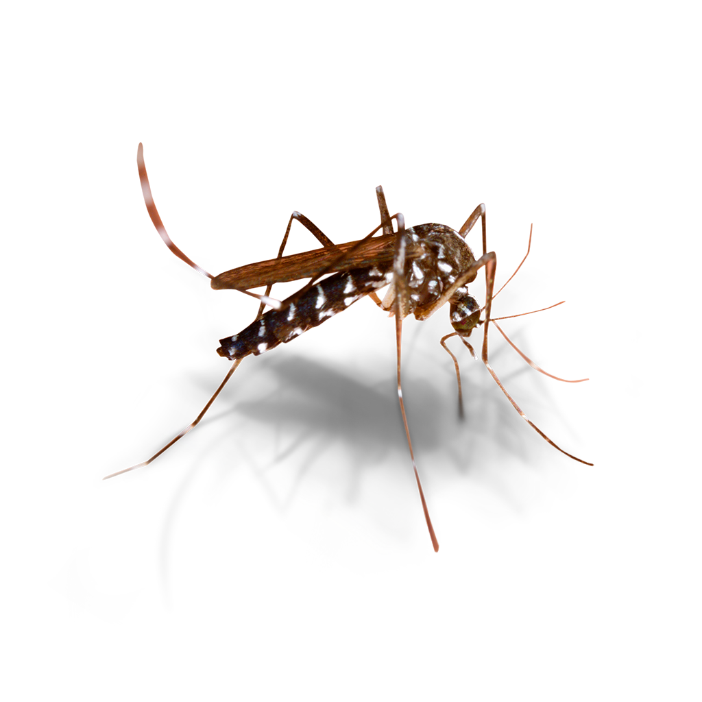 https://mantovaservice.it/wp-content/uploads/2017/11/mosquito-01.png
