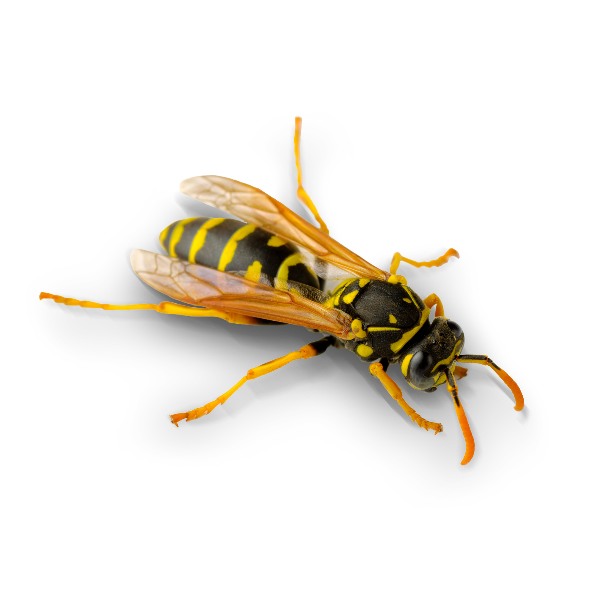 https://mantovaservice.it/wp-content/uploads/2017/11/wasp-01.png