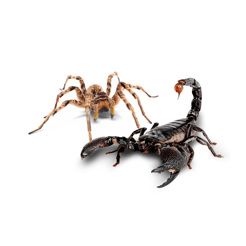 https://mantovaservice.it/wp-content/uploads/2020/05/scorpion-spider-01.png