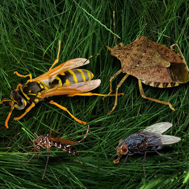 https://mantovaservice.it/wp-content/uploads/2020/07/insetti-volanti.jpg